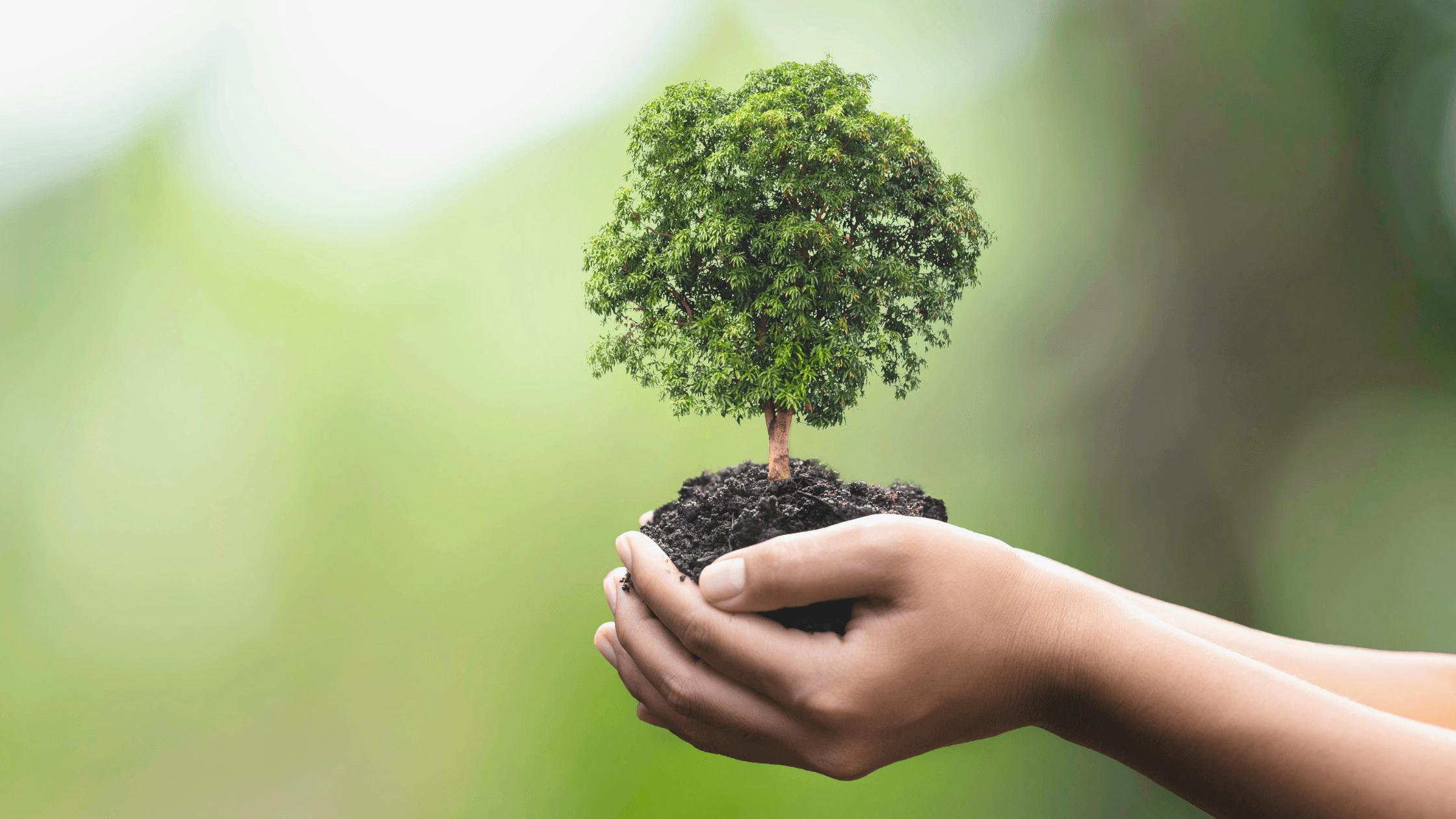 4 documentários para refletir sobre a importância da Biodiversidade