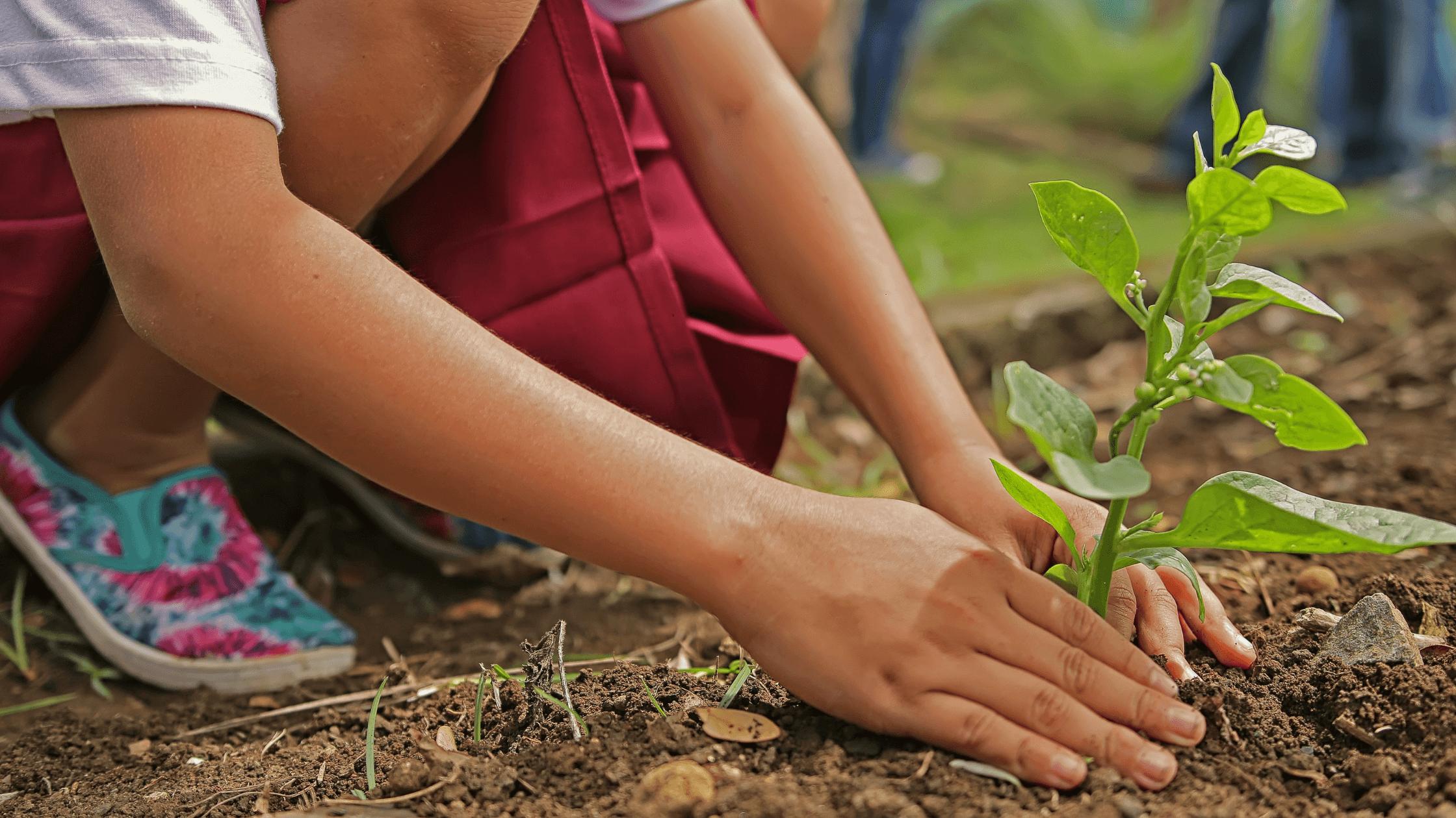 Meio ambiente: 4 conferências ambientais que revolucionaram o desenvolvimento sustentável